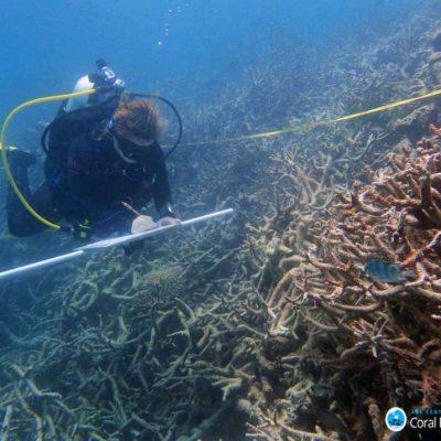 onderzoek koraal