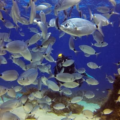 school vissen en een duiker